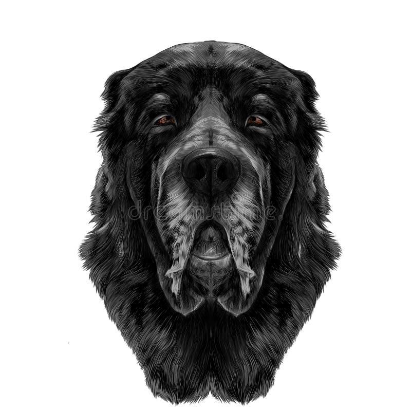 Psi ` s głowy traken Alabai lub Środkowego Azjatyckiego pasterskiego psa nakreślenia wektorowe grafika ilustracji