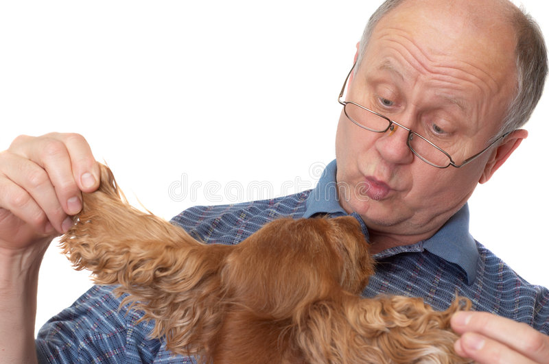 psi senior łysy człowiek obraz stock