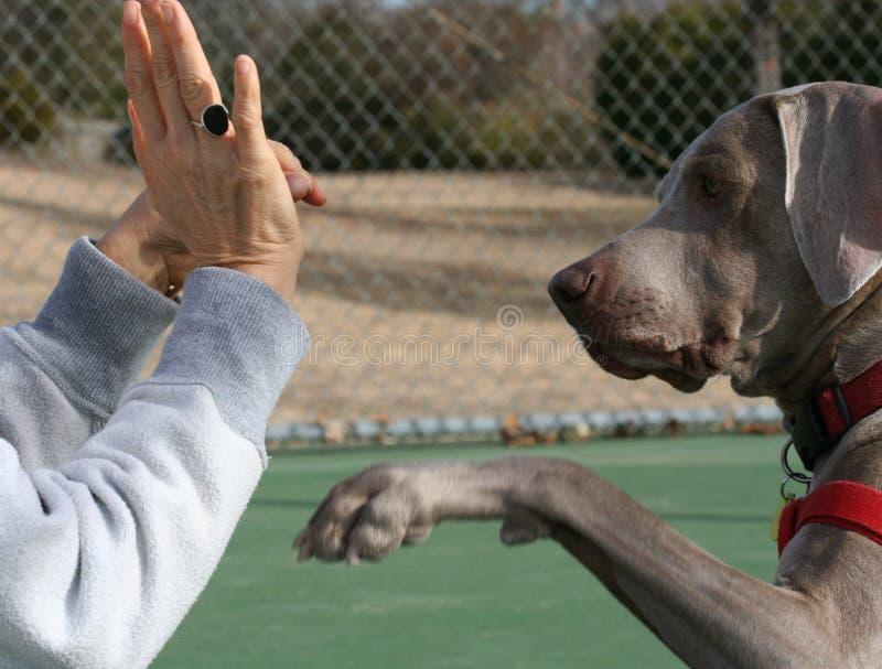 psi sesji szkolenia zdjęcia stock
