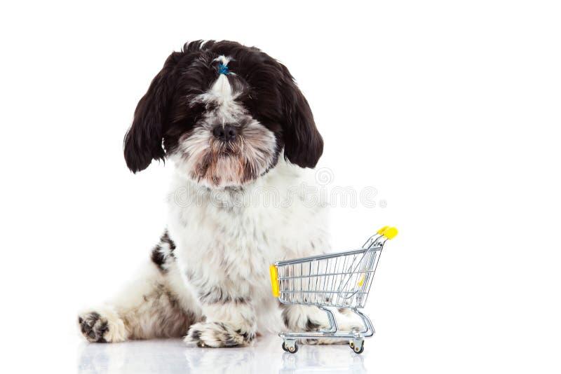 Download Psi Shih Tzu Z Zakupy Trolly Odizolowywającym Na Białym Tło Psa Zwierze Domowy Zdjęcie Stock - Obraz złożonej z potomstwa, zwierzę: 53784280