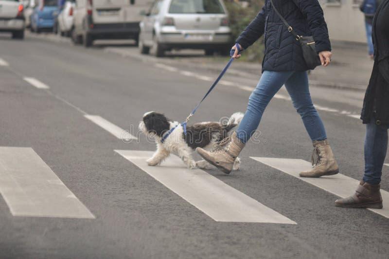 Psi skrzyżowanie ulica obrazy royalty free