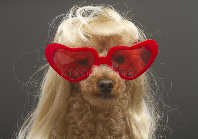 psi skwaśniały fotografia royalty free