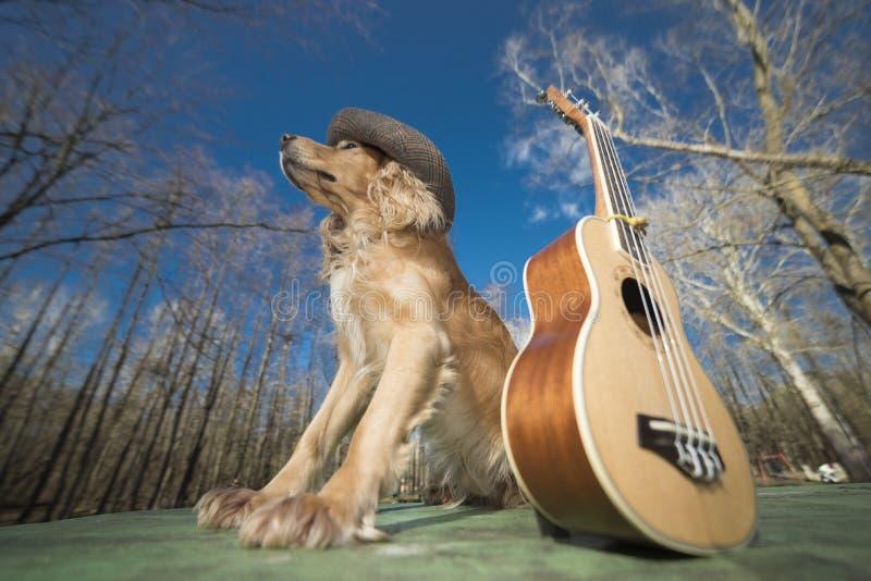 Psi spaniel złoty kolor z ukulele Ukreina obrazy royalty free
