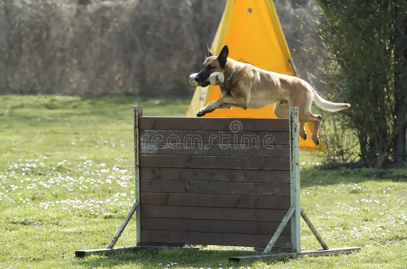 psi sportu zdjęcia stock