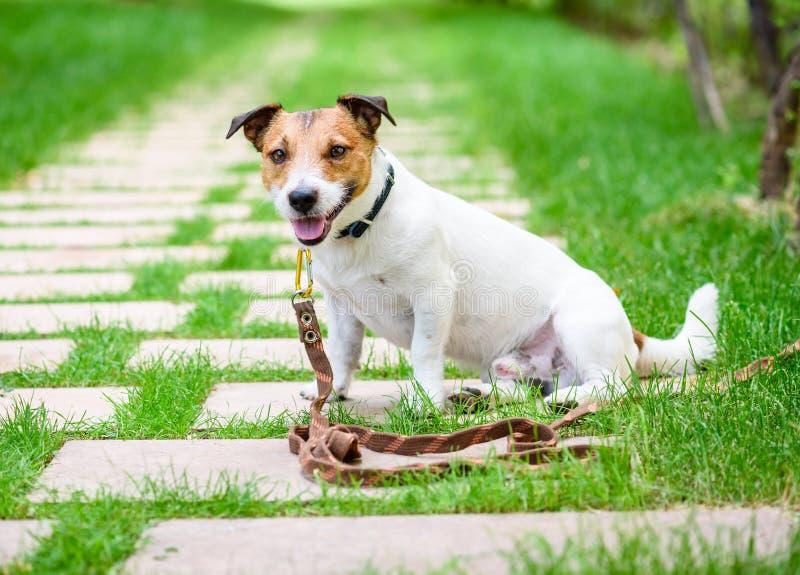 Psi stażowy akcesoryjny pojęcie z psem pętającym z długa linia smycza arkaną obrazy stock
