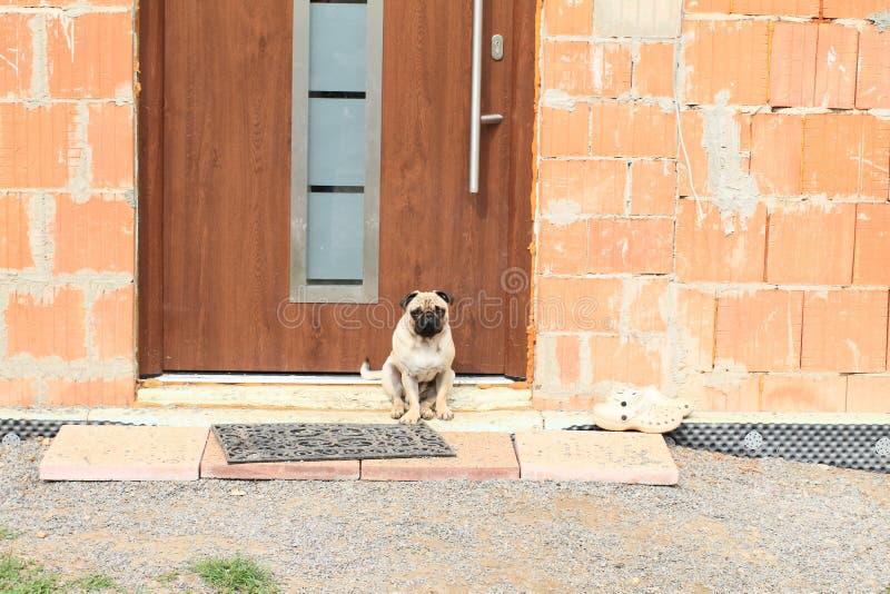 Psi strzeżenia drzwi zdjęcia royalty free