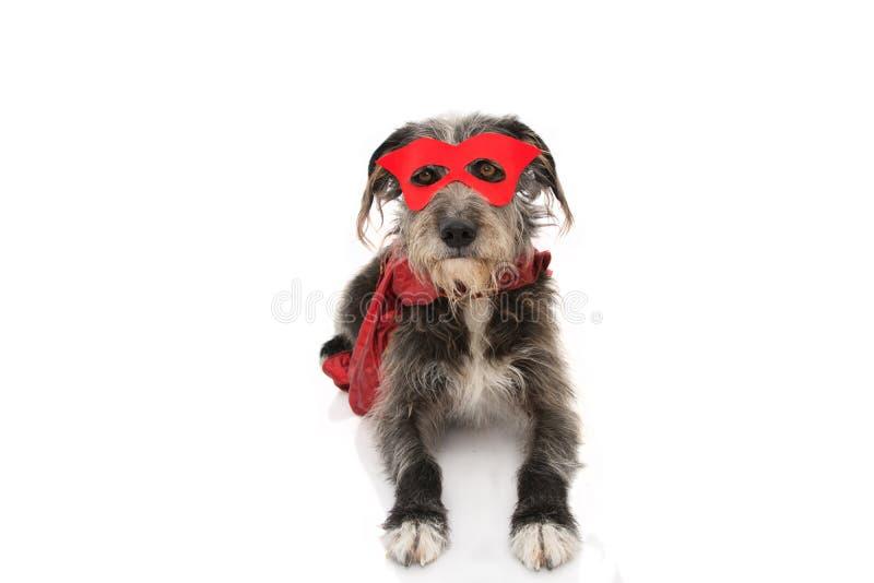 PSI SUPER bohatera kostium ?MIESZNY szczeniak JEST UBRANYM CZERWON? mask? I przyl?dek w d?? le?e? Karnawa? lub Halloween Odosobni obraz royalty free