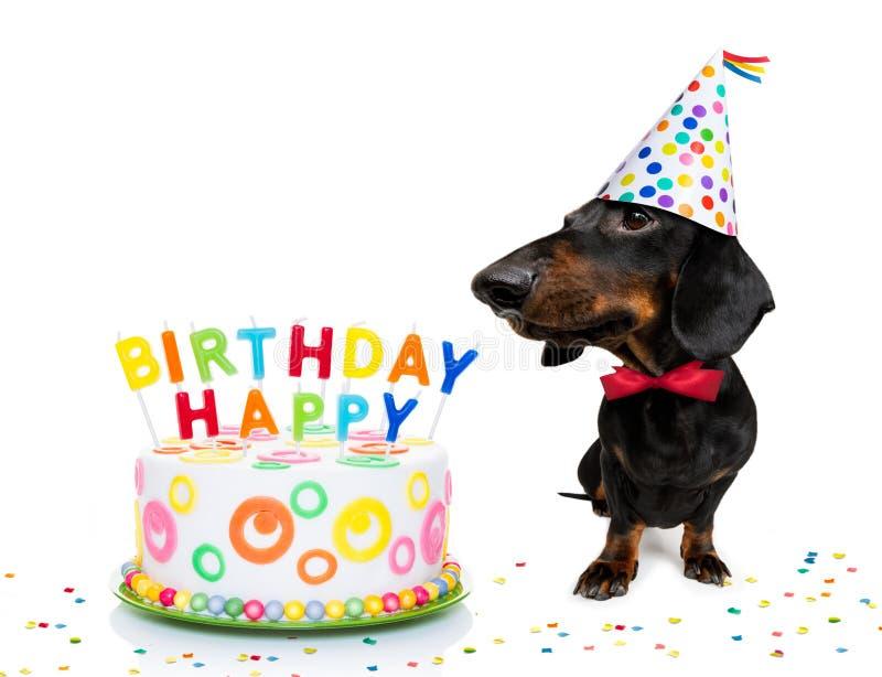 psi szcz??liwy urodziny fotografia stock