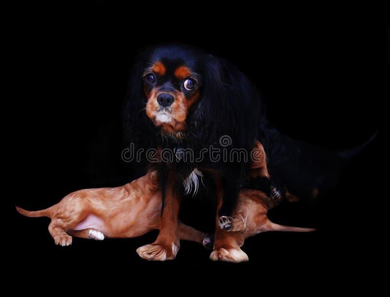 psi szczeniaki obrazy royalty free