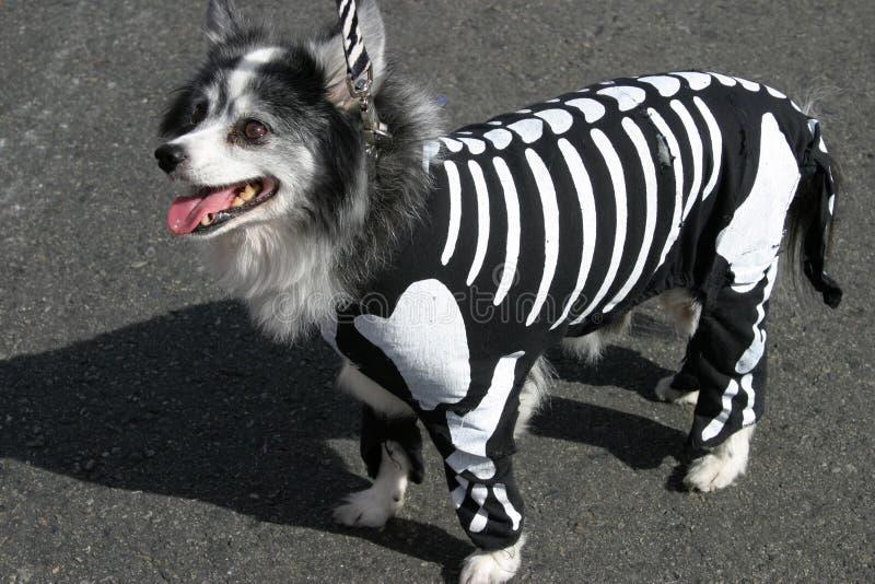 psi szkielet garnitur obraz stock