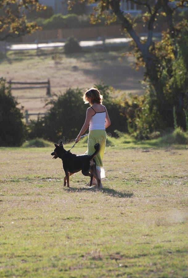psi szkolenia fotografia stock