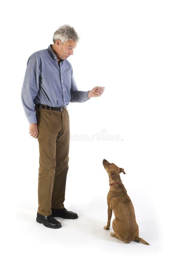 psi szkolenia obrazy stock