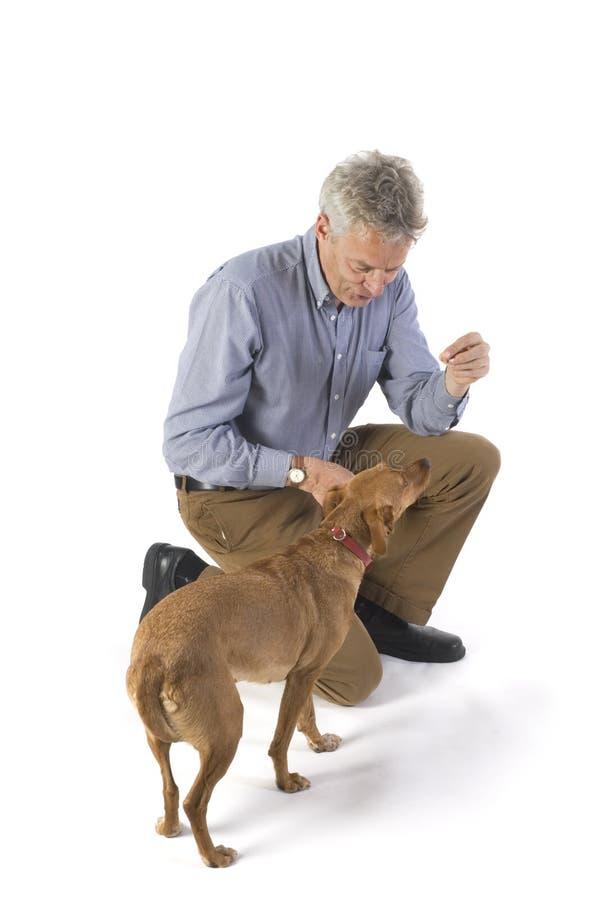 psi szkolenia fotografia royalty free