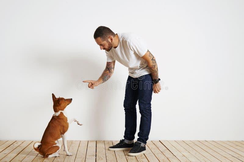 Psi szkolenie proces w domu fotografia royalty free