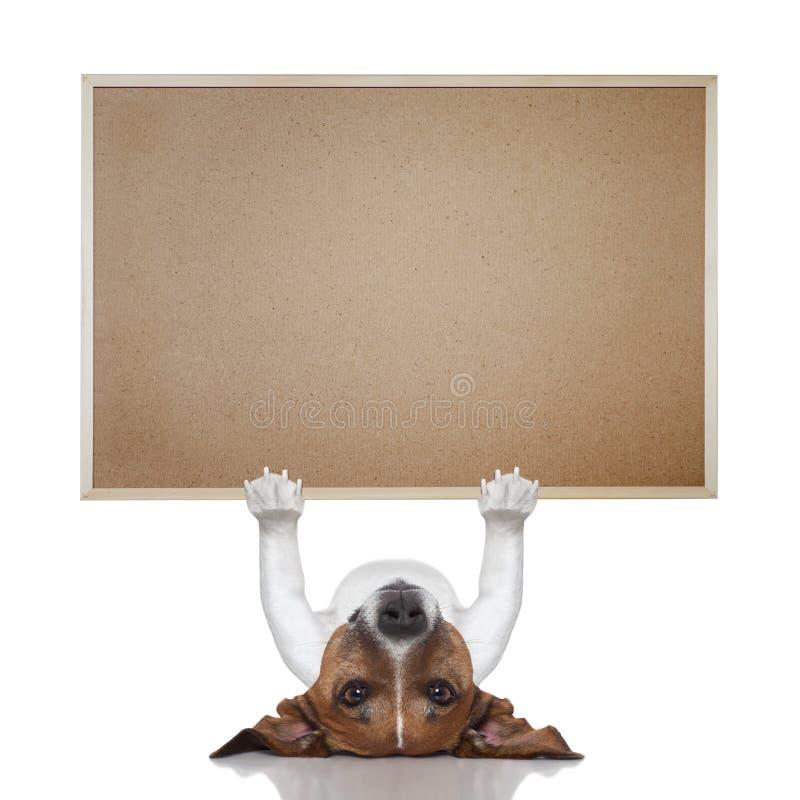 Psi sztandar zdjęcia royalty free