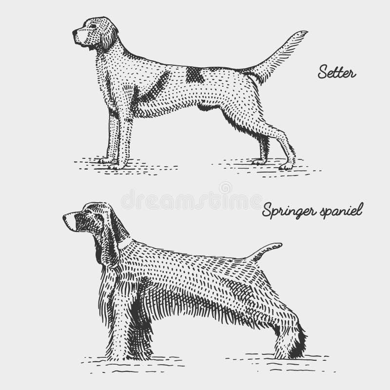 Psi traken grawerujący, ręka rysująca wektorowa ilustracja w woodcut scratchboard stylu, roczników gatunki ilustracji