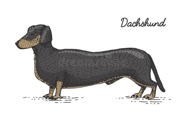 Psi traken grawerujący, ręka rysująca wektorowa ilustracja w woodcut scratchboard stylu, roczników gatunki ilustracja wektor