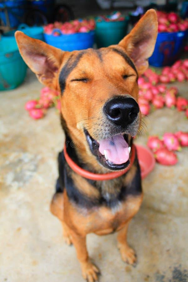 Psi uśmiech zdjęcia royalty free