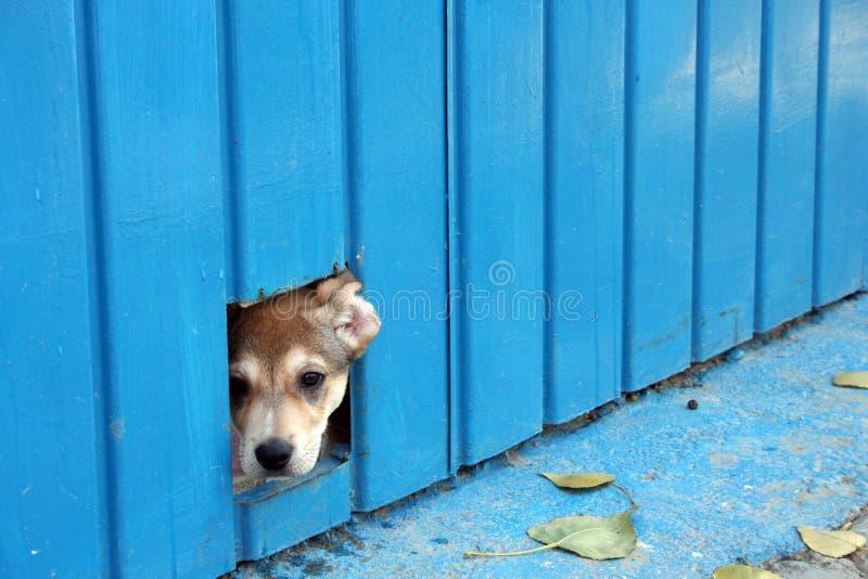 psi ukryć obrazy royalty free