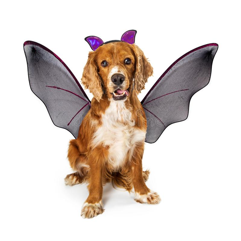 Psi Weating nietoperza Halloween kostium obraz stock