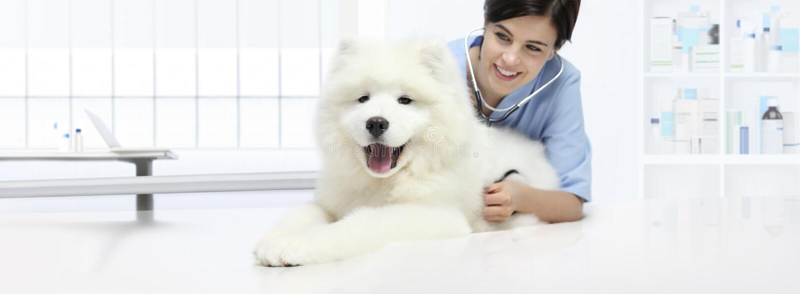 Psi weterynaryjny egzaminacyjny uśmiechnięty weterynarz z stetoskopem fotografia royalty free