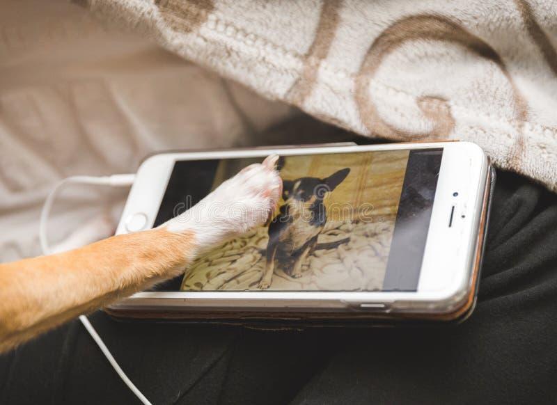 Psi wzruszający wizerunek inny pies na telefonie komórkowym fotografia stock