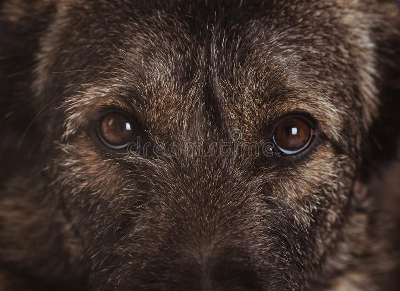Psi zbliżenie Frontowy widok obrazy stock