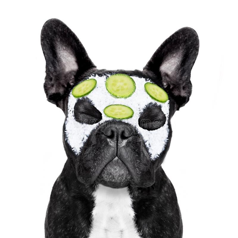 Psi zdroju wellness obrazy stock