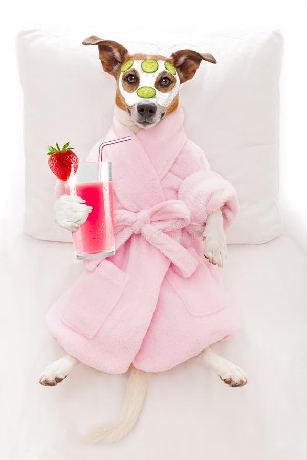 Psi zdroju wellness fotografia stock