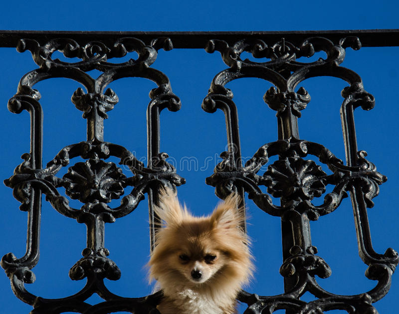 Psi zerkanie przez balkonu ogrodzenia Nowy Orlean - dzielnica francuska - zdjęcia royalty free