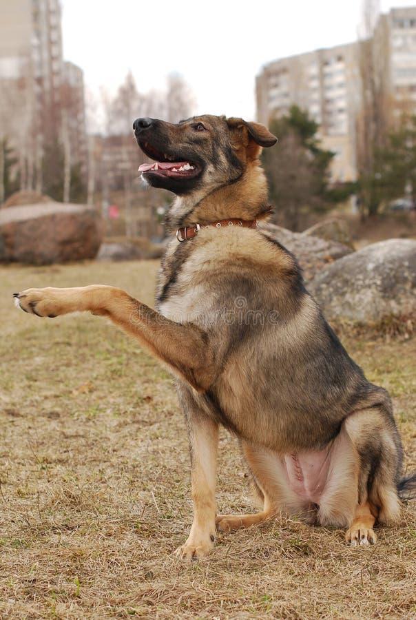 psia łapa przedkłada fotografia stock