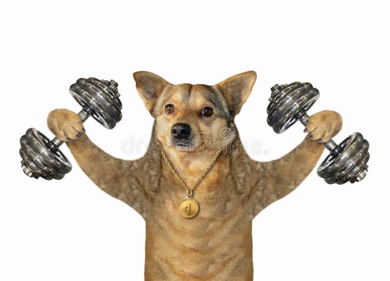 Psia atleta z dumbbells zdjęcia royalty free