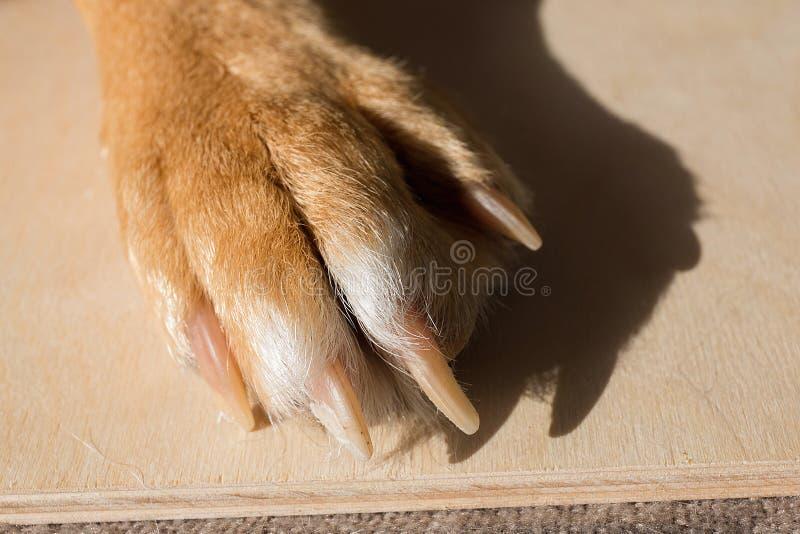 Psia cieków i nóg drewniana powierzchnia Zamyka w górę wizerunku łapa bezdomny pies tileable skóry bezszwowa tekstura Odpoczynkow obrazy stock