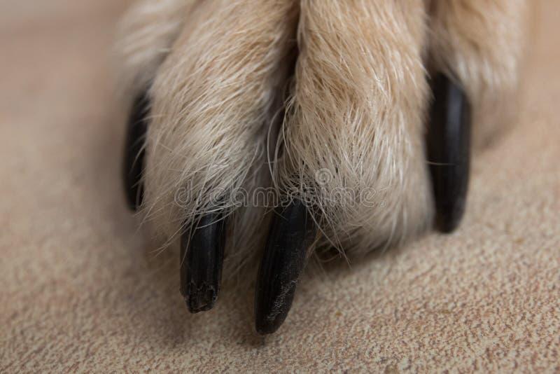 Psia cieków i nóg tekstury powierzchnia Zamyka w górę wizerunku łapa bezdomny pies tileable skóry bezszwowa tekstura Odpoczynkowy zdjęcia royalty free