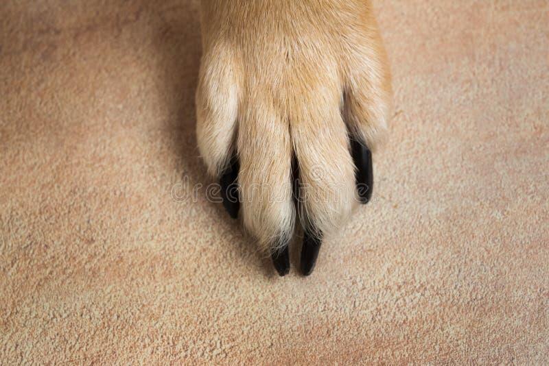 Psia cieków i nóg tekstury powierzchnia Zamyka w górę wizerunku łapa bezdomny pies tileable skóry bezszwowa tekstura Odpoczynkowy obraz stock