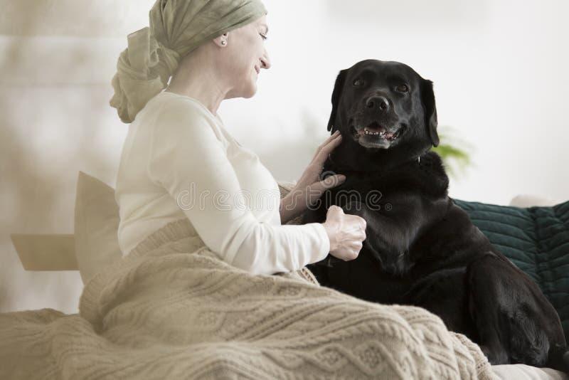 Psia daje łapy choroby kobieta obrazy stock