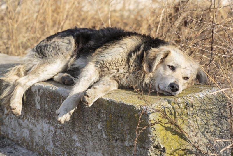 Psia depresja zdjęcia stock