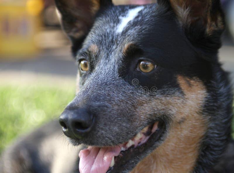 Psia dysza i oka zbliżenie obrazy royalty free