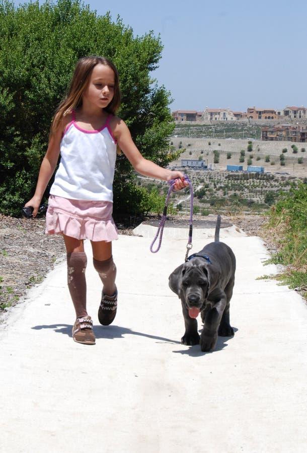 psia dziewczyno ją minąłem zdjęcie royalty free