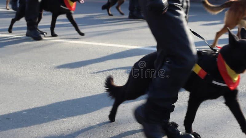 Psia Milicyjna brygada zdjęcie wideo