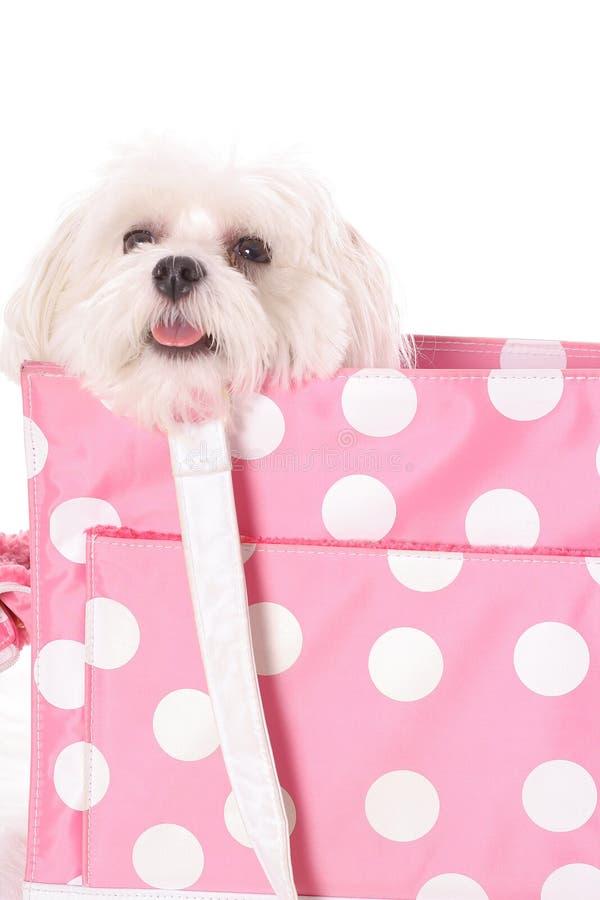 psia okrężnic urocza obraz royalty free