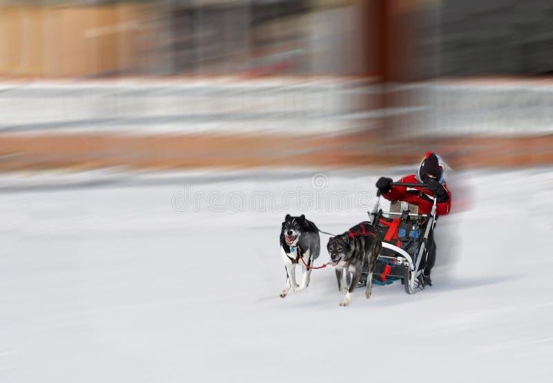 psia osoby fury zimy. obraz stock
