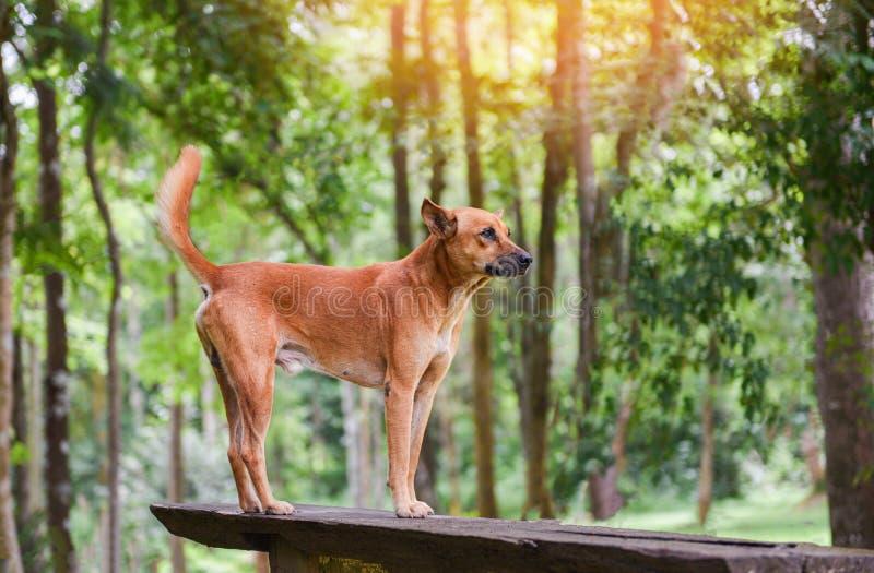 Psia parkowa pozycja na drewna i natury zielonym drzewnym lesie zdjęcia stock