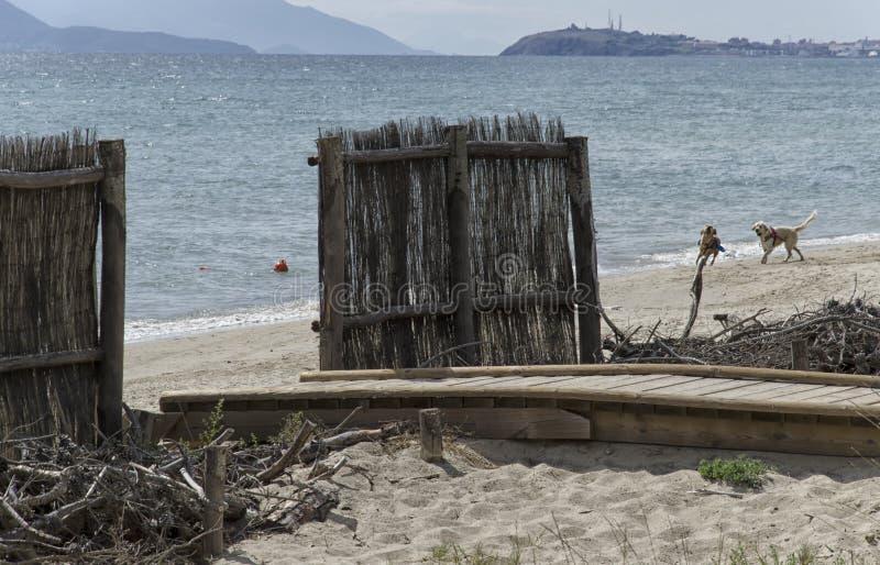 Psia plaża w Włochy fotografia stock