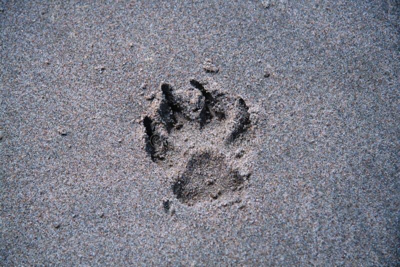psia plażowa paw obrazy royalty free