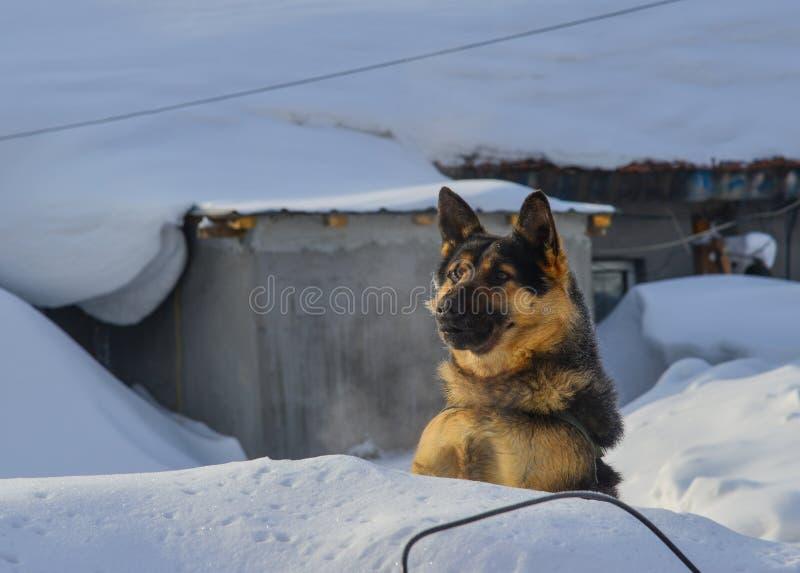Psia pozycja na śniegu obrazy stock