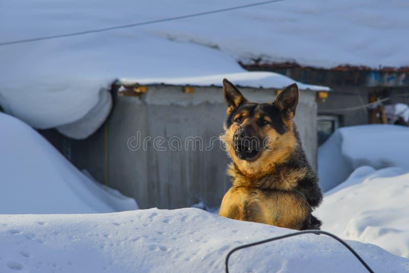 Psia pozycja na śniegu obrazy royalty free