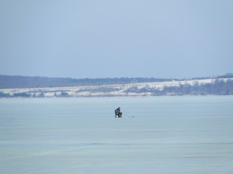 Psia pozycja na drzewnym fiszorku patrzeje stapianie lód na jeziorze przy pogodnym wiosna dniem obraz stock