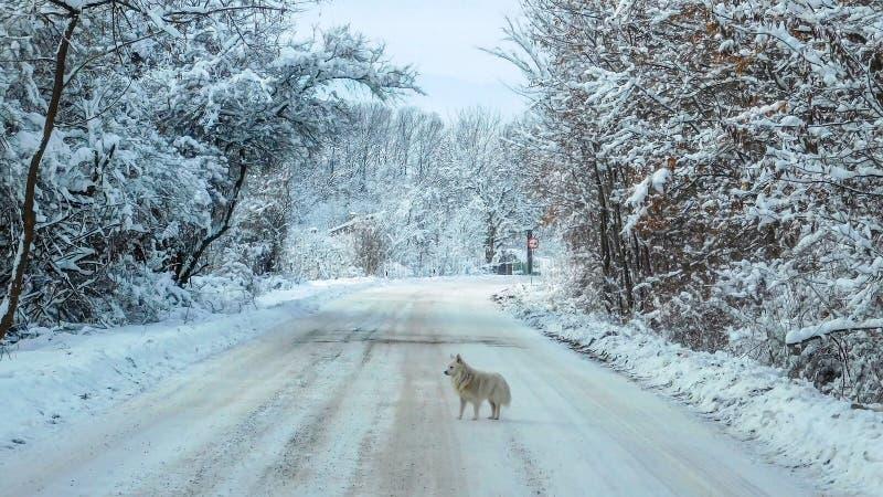 Psia pozycja Po środku drogi zdjęcie stock