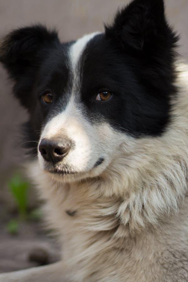 Psia przyjaźń poświęcać zwierzę przyjaciela miłości spojrzenie zdjęcia royalty free